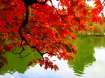 fall-autumn-colors-leaves-mexicanwave